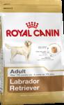 Labrador Retriever Adult (Лабрадор)