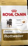 Rottweiler Junior (Ротвейлер)
